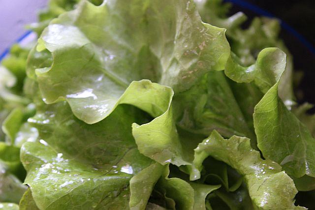 Als Beilage - Grüner Salat